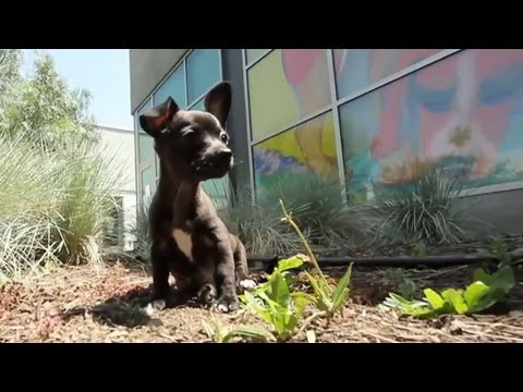 Cute Honey Explores the Yard | The Daily Puppy