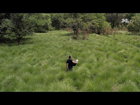Le brochet aquitain au marais du Plata