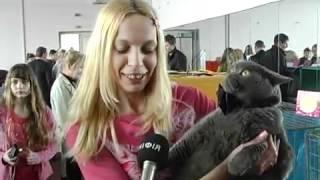 Evende. Ua кошки купля/продажа новых и б/у товаров в разделе животные. Множество частных и комерческих предложений на доске объявлений.