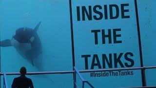 Inside The Tanks (Full Documentary)