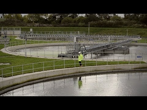 Creating a Healthier River Thames