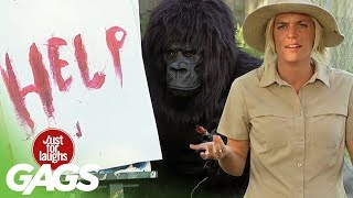 Best Of Just For Laughs Gags - Funniest Gorilla and Mouse Pranks
