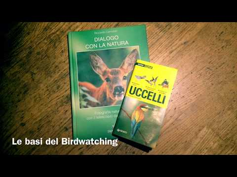 Guida al Birdwatching #3 - I Canti