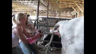 A Family Farm, A Year In Review 2008- Farm Girl