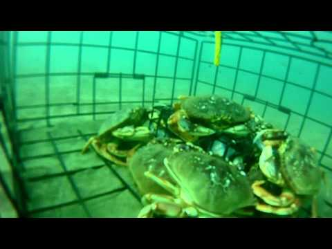 GoPro Dungeness crabbing on the Oregon Coast