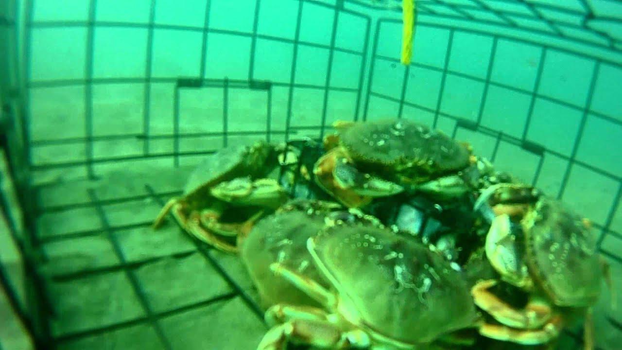 Nj Commercial Crab Trap License