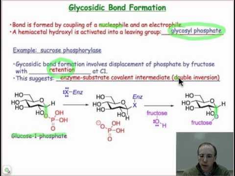 n glycosidic bond  hqdefault.jpg