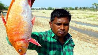 GOLD FISH FRY | INDIAN FORMER MAKING GOLD FISH FRY RECIPE | VILLAGE FISH RECIPES