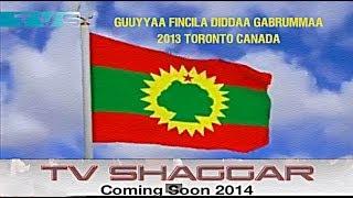Toronto: Fincila Diddaa Gabrummaa 2013