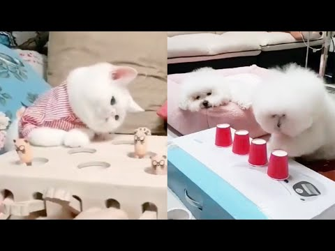 CUTE Cats play Cups and ball guessing game  - Funny Dogs Video