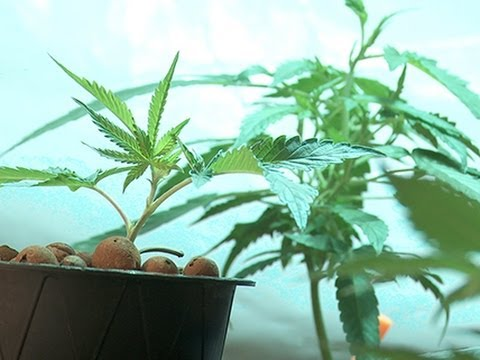 Is Colorado Pot Overtaxed and Over-Regulated Already?