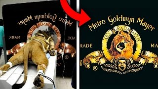 Top 10 CRAZY STORIES BEHIND FAMOUS LOGOS (True Stories Behind Hollywood Studio Logos)