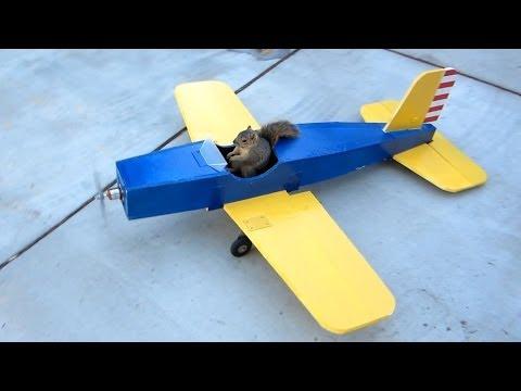 Esquilo ROUBA avião telecomandado e levanta voo nele! INACREDITÁVEL!!