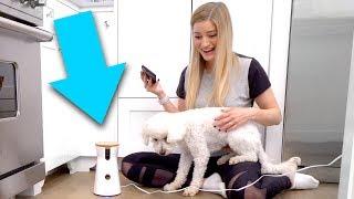 � iPhone Dog Treat Tosser!