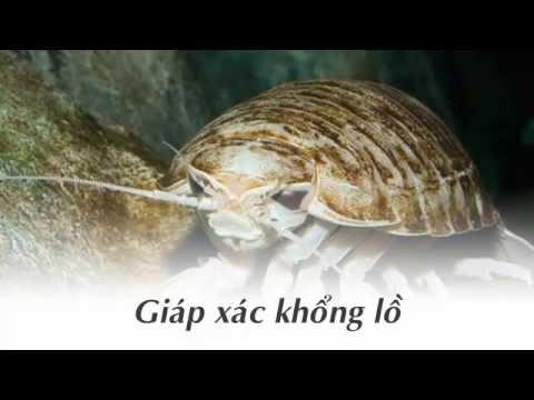 Những động vật khổng lồ dưới đáy đại dương- Khám phá thế giới