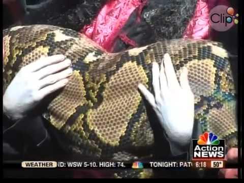 Medusa - con rắn lớn nhất thế giới.mp4
