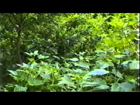 Forest Gardening with Robert Hart (Complete)