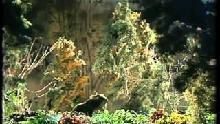 090 Der Mann der die kahlen Bäume zum Blühen brachte
