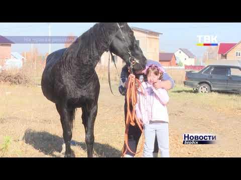 Иппотерапия и конные прогулки теперь станут для бердчан доступнее