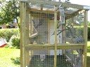 Canary Cage2