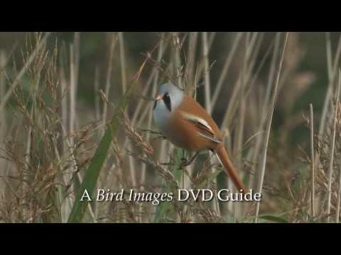 Birdwatching at RSPB Titchwell Marsh