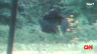 Backyard Bigfoot Caught On Camera In Kentucky