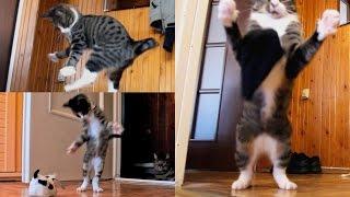 Kucing itu terlahir untuk menjadi atlet yang baik, ini buktinya