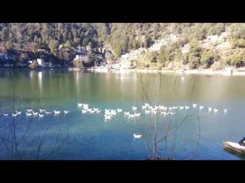 Nainital Nainital Tour Nainital Tourism Ducks On Nainital Lake