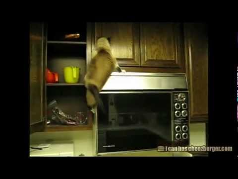 Cheezburger : Animal Fails