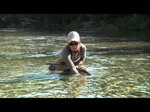 La remise à l'eau de saumon