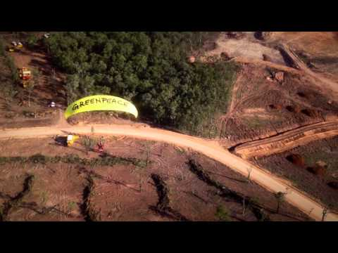 Greenpeace Paragliders over Leard State Forest - 4th June 2014