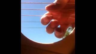 Um iPhone dentro de um violão. O Efeito é Incrível!