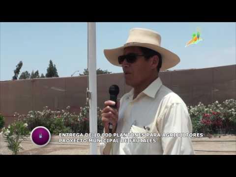 MUNICIPIO ENTREGA 10,000 PLANTONES PARA AGRICULTORES POCOLLAINOS