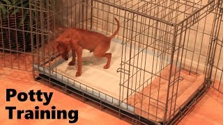 Potty Training Puppy Apartment Full Video