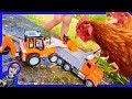 Dump Truck and Backhoe Feed Chickens