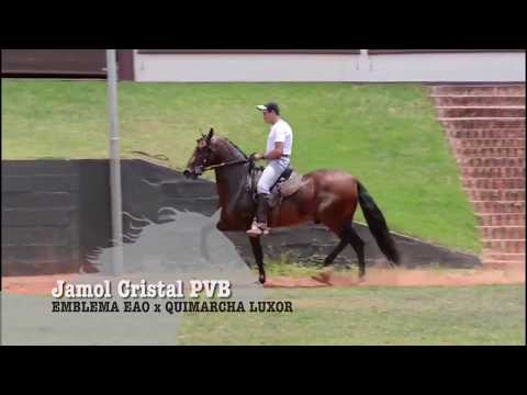 CAVALO DA SEMANA - JAMOL CRISTAL PVB - MANGALARGA MARCHADOR