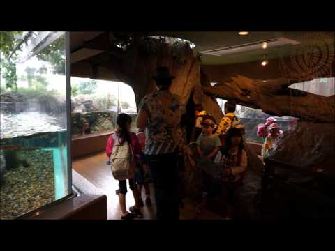 Various Aquariums in Japan [ HD ]