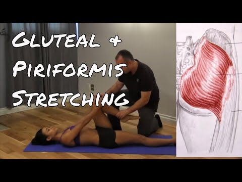 How to stretch glut major and piriformis using PNF