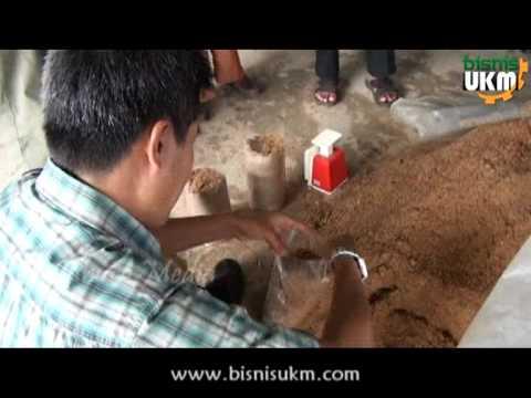 Pelatihan Budidaya Jamur Tiram Bersama Bisnis UKM