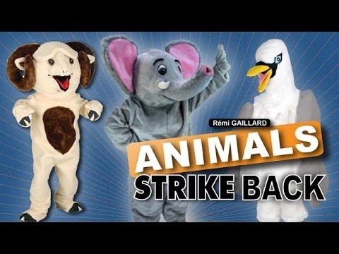 animals strike back r mi gaillard youtube. Black Bedroom Furniture Sets. Home Design Ideas