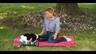 Pet Command Commercial Pet Commander As Seen On TV