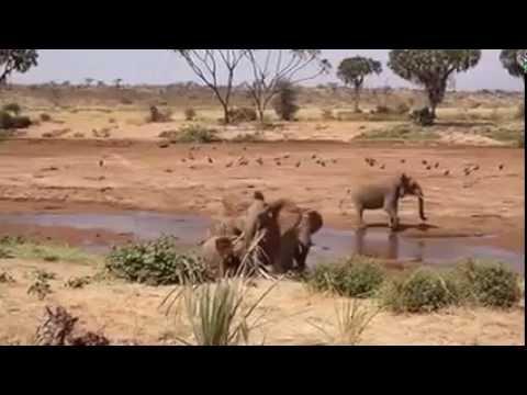 Nairobi, Lago Turkana, Samburu Park