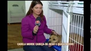 Cadela quase morre ao morder bomba que explodiu na boca dela em Juiz de Fora
