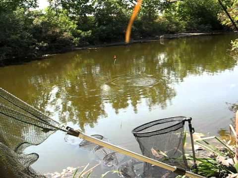Pecanje šarana na plovak(KALAJ)-Carp fishing with float