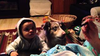 Family Dog Learns To Say 'Mama' Before Baby