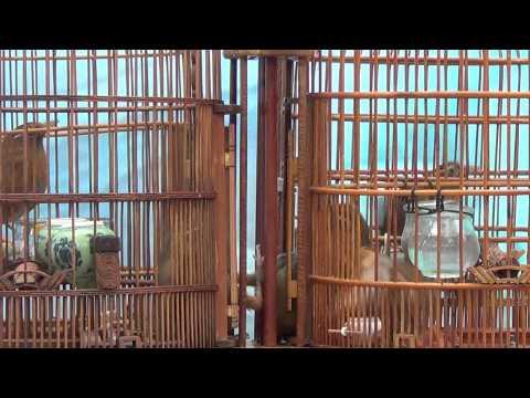 HOI HOA MI CHIEN LIEN TINH BN.16.03,2014,PHAN 3