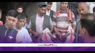 سكان سيدي مومن فكازا طالع ليهم الدم والسلطات آوت حول عملية بيع أضاحي العيد | خارج البلاطو