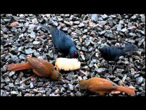 Pássaros Silvestres 1