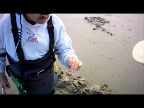 Hình ảnh trong video Steve digs gold sanded in beach today 02-27