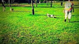 [The Dog Park] Video